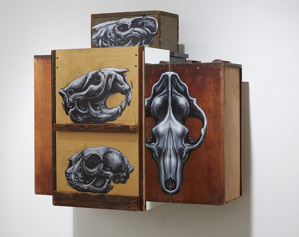 Roa      -  <strong>Cabinet Specula Crania (DETAIL)</strong> (<strong style = 'color:#635a27'></strong>)<bR />