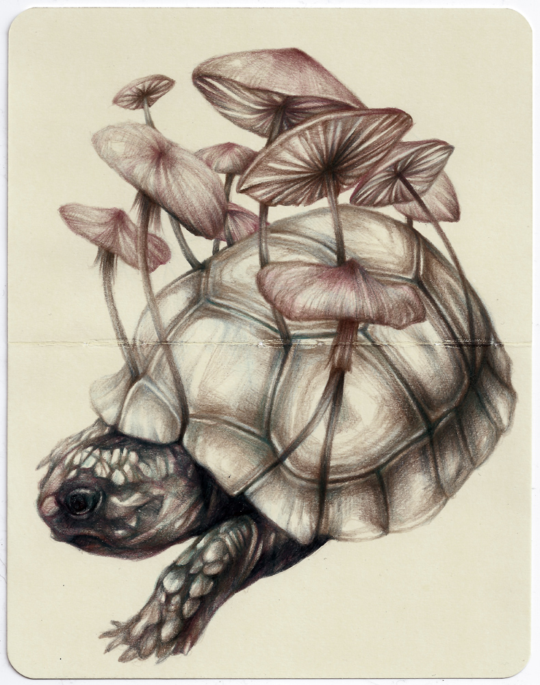 Marco  Mazzoni -  <strong>Darwin Moving</strong> (2013<strong style = 'color:#635a27'></strong>)<bR /> colored pencil and ink on moleskine paper,   7 x 5.5 inches  (18 x 14 cm)  11.25 x 9.75 inches, framed
