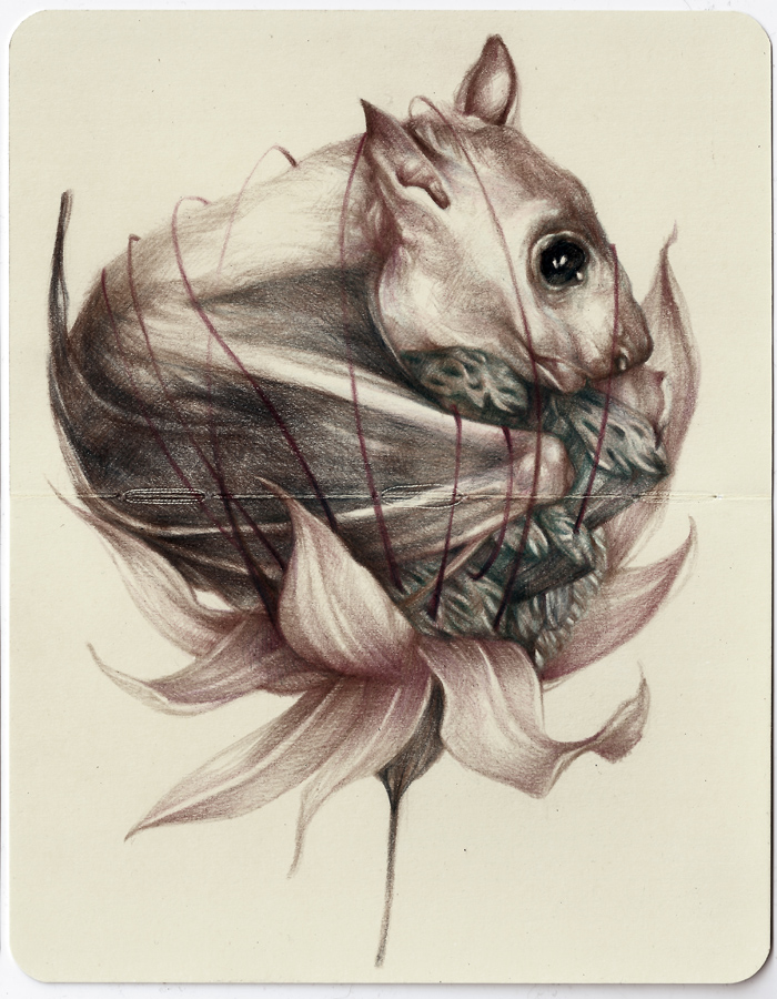 Marco  Mazzoni -  <strong>Variation is one thing, evolution is quite another</strong> (2013<strong style = 'color:#635a27'></strong>)<bR /> colored pencil and ink on moleskine paper,   7 x 5.5 inches  (18 x 14 cm)  11.25 x 9.75 inches, framed