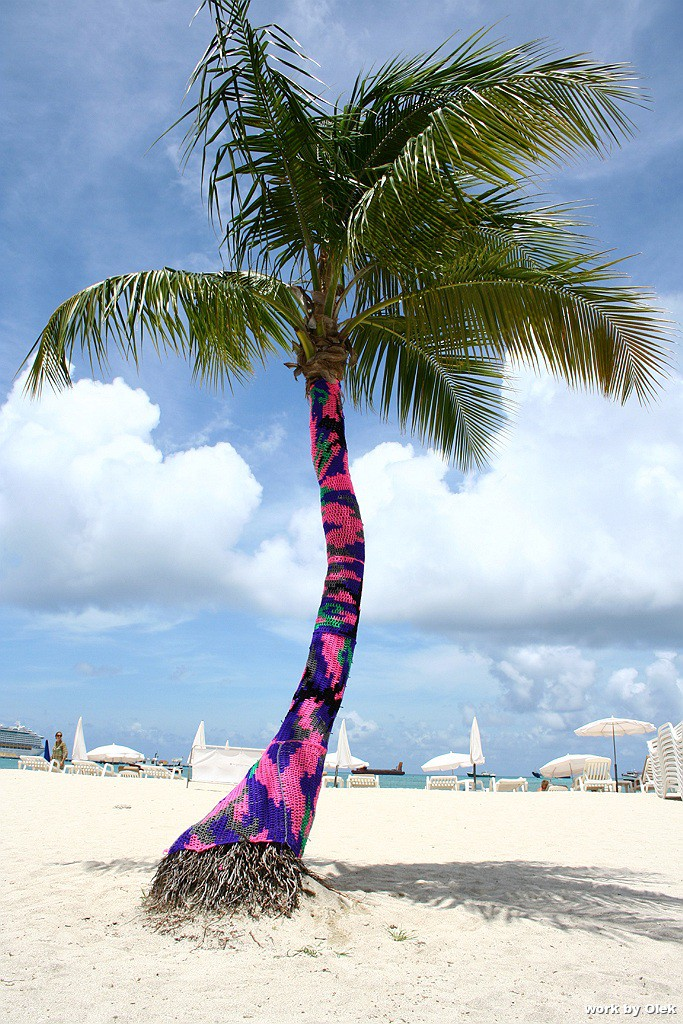 Olek  &nbsp -  <strong>Crocheted Palm Tree</strong> (2011<strong style = 'color:#635a27'></strong>)<bR /> digital C print,   26 x 40 inches  (66 x 101.6 cm)