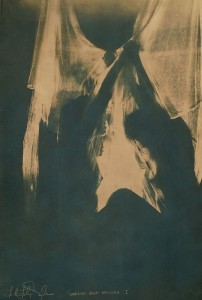Faith47 -  <strong>Umbriel and Belinda</strong> (<strong style = 'color:#635a27'></strong>)<bR /> cyanotype (60 x 40 cm) $2,500